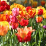 Bloemen voor speciale gelegenheden bestellen
